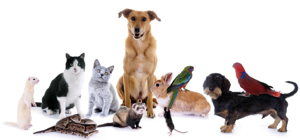 Olika husdjur